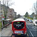 TQ4276 : 244 bus at bus stop on Shooters Hill Road by Robin Webster