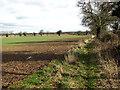 TG2123 : Crop fields west of Brampton by Evelyn Simak