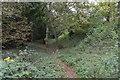 TL4953 : Ditch, Wandlebury Ring by N Chadwick
