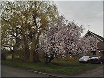 TL0531 : Garden by Harlington Road, Sharpenhoe by David Howard