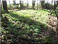 TM0288 : Overgrown hut platform by Evelyn Simak