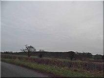 TL0132 : Fields in Wood End by David Howard