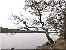 NH6390 : The side of Loch Migdale by Julian Paren