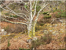 NH6490 : Hillside below Migdale Rock by Julian Paren