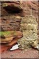 SX8962 : Cliff, Hollicombe by Derek Harper