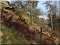 NS4674 : Fence on a slope in woodland by Lairich Rig