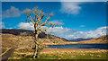 NM9258 : Tree and Lochan Doire a' Bhraghaid : Week 12