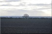 TL3757 : Tree in hedge by N Chadwick