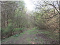 SP6439 : Path in Whitfield Wood by Jonathan Thacker