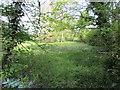 SP6339 : Silted lake, Biddlesden Park by Jonathan Thacker