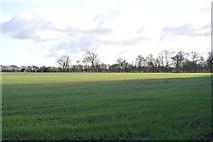 TL4258 : Field by Harcamlow Way by N Chadwick