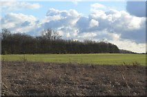 TL4358 : Field and field boundary by N Chadwick
