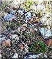 TQ9418 : Rottingdean sea-lavender on Rye Harbour Nature Reserve by Patrick Roper