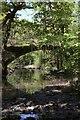 SH6539 : Ivy Bridge Gwynedd : Week 19