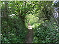 SW5431 : Woodland Footpath from St Hilary to Trevabyn by Peter Wood