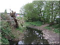 SP0983 : The River Cole by JThomas