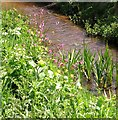 TG3203 : Wild flowers beside Hellington Beck by Evelyn Simak