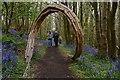 TQ5452 : Riverhill Himalayan Garden: Chestnut Wood Bluebell Trail 9 : Week 19
