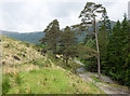 NN0447 : Pine trees beside estate road in Glen Ure. by Trevor Littlewood