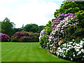 TQ2787 : Rhododendrons in the gardens at Kenwood House by Rod Allday