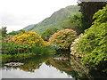 NS1485 : Benmore Botanic Garden : Week 22