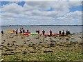 SZ0188 : Kayakers, Brownsea Island : Week 23