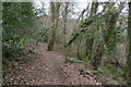 SX4961 : Footpath in Widewell Wood by N Chadwick