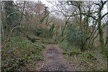 SX4961 : Footpath, Widewell Wood by N Chadwick