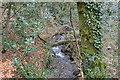 SX4961 : Stream in Widewell Wood by N Chadwick