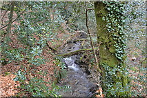 SX4961 : Stream in Widewell Wood by N Chadwick