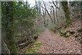 SX4961 : Woodland footpath by N Chadwick