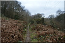 SX4861 : Porsham Wood by N Chadwick