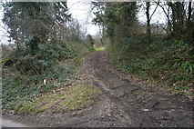SX4861 : Track off Coombe Lane by N Chadwick