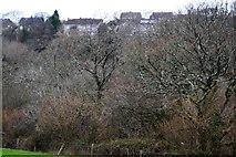 SX4761 : Tamerton Foliat through trees by N Chadwick
