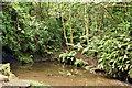J3469 : Stream, Belvoir forest, Belfast (June 2017) by Albert Bridge