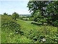 SO6574 : Farmland near Cedarville by Philip Halling