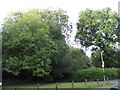 SU9686 : Trees on the corner of Stevenson Road, Hedgerley by David Howard