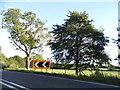 SP9862 : Bedford Road north of Souldrop by David Howard
