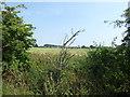 TQ4790 : Looking across the Borough boundary at Furze House Farm by Marathon