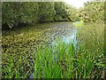 NY2061 : A long pond, Bowness-on-Solway Nature Reserve by Rose and Trev Clough