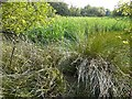 NY2061 : A seasonal pond, Bowness-on-Solway Nature Reserve by Rose and Trev Clough