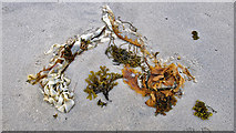 NR3890 : Nature's artistry - as found at Port a' Chapuill by Julian Paren