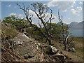 NM4839 : Wind-blown woodland by Jonathan Wilkins