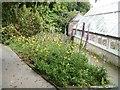 SW9946 : Lost Gardens [9] by Michael Dibb