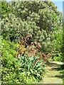 NR6447 : Path in Achamore Gardens by M J Richardson