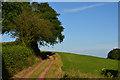 SS7402 : Mid Devon : Farm Track : Week 27