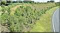 J3194 : Road landscaping, Lismenary, Ballynure - July 2017(2) by Albert Bridge