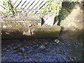 SX4660 : Tamerton Foliot stream by timothy luckham