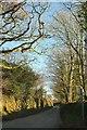 SX0973 : Lane at Tregenna by Derek Harper