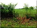 H6556 : Skey Townland by Kenneth  Allen